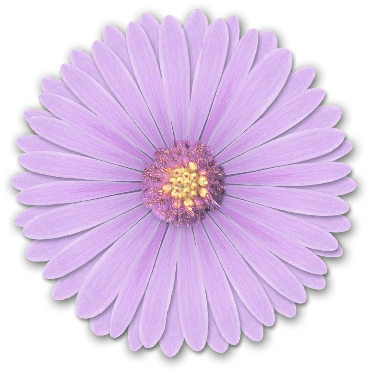 light purple flower - HD 1453×1413